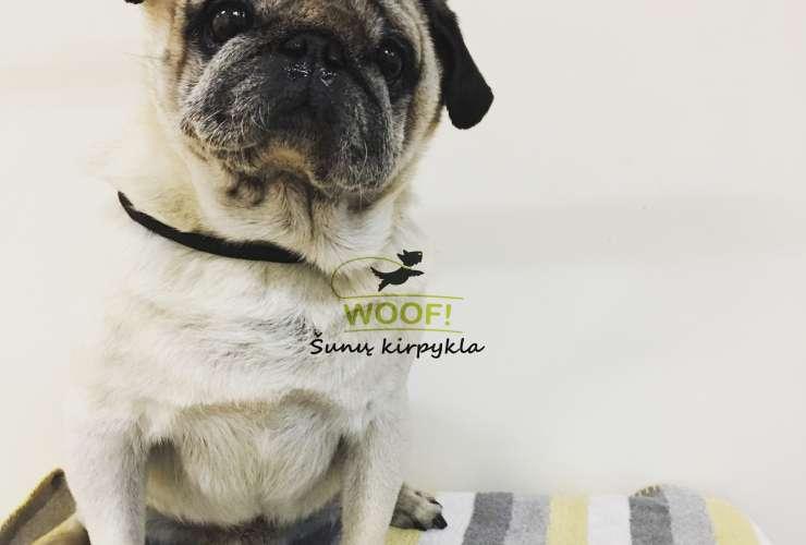 Kodėl šunų kirpimas yra svarbus